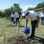 Белореченк, 4 школа, яблоневую аллею подкормили