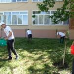 Белореченк, Гимназия, яблоневую аллею подкормили