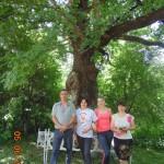 Белореченск, 400-летний дуб
