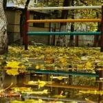 Белореченск осенью