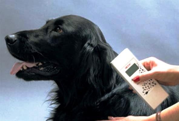 Жителей Кубани обязали заводить паспорта домашним собакам и кошкам