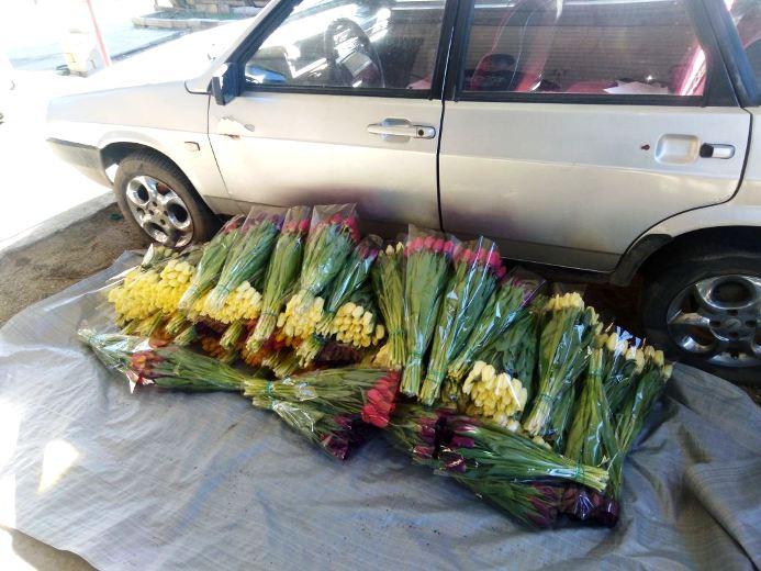 Белореченские полицейские раскрыли кражу тюльпанов