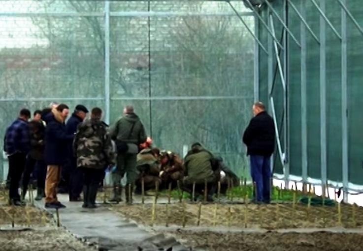 Самшитовые грядки появились в Белореченском районе