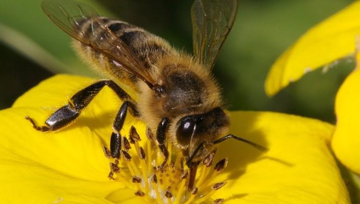 В Белореченске прошло совещание с пчеловодами и землепользователями