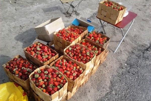 В Белореченском районе прошел рейд по борьбе со стихийной торговлей