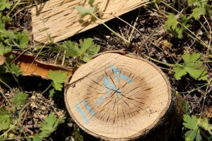 Белореченск спил пенек дерево