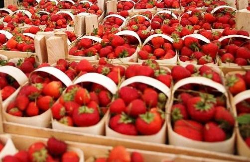 На Кубани с начала года собрали более 600 тонн ягод