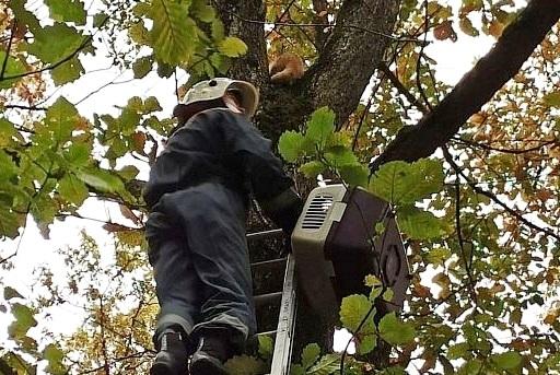 В Белореченском районе спасатели сняли с дерева кота через три дня «протеста»