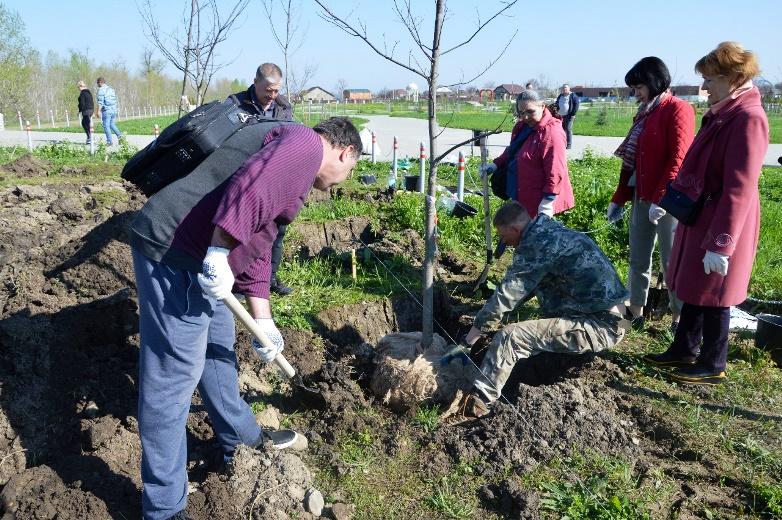 Работники белореченской администрации и депутаты посадили красные дубы