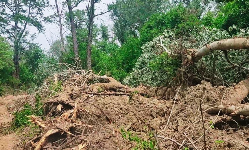 В Белореченском районе выявили незаконную порубку леса